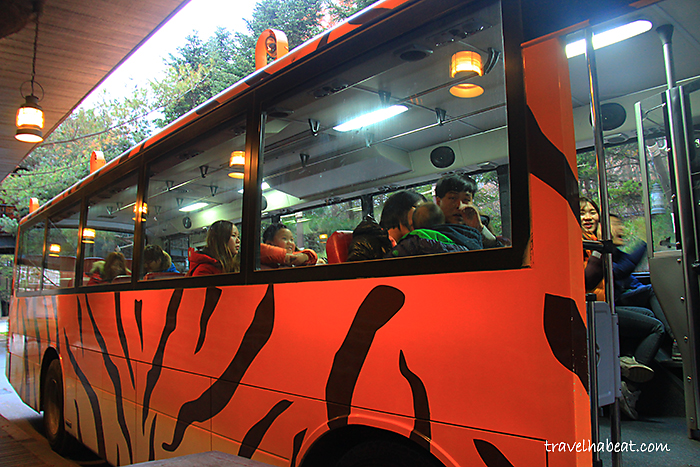 Everland Safari Bus Tour