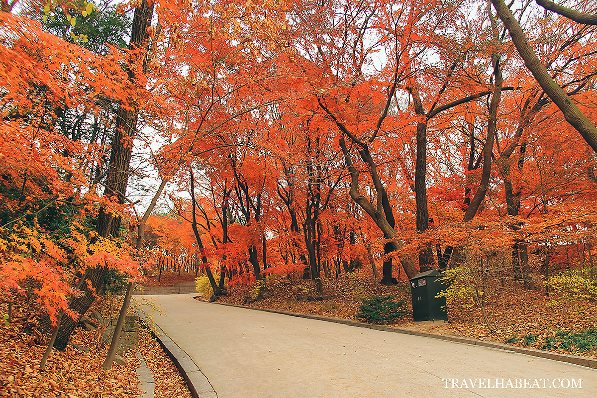 Changdeokgung Palace's Secret Garden