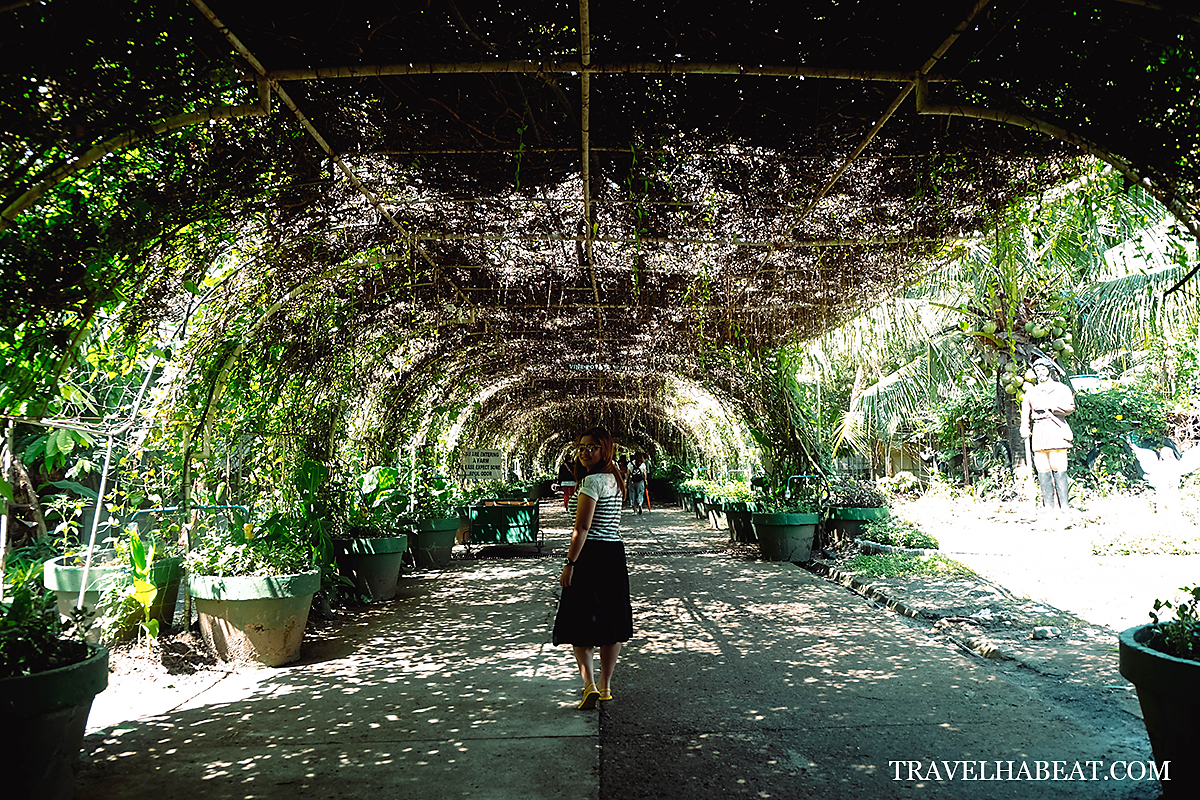 The cool vine-covered walkway.